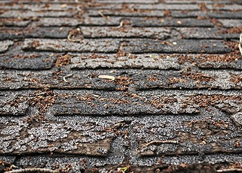 missing cracked or curled shingles